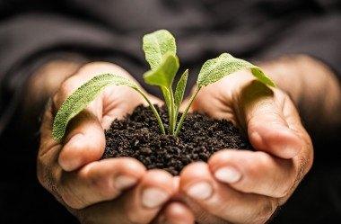 Descubra aqui por que nossa Marca assumiu um compromisso com o futuro através do Selo Site Sustentável